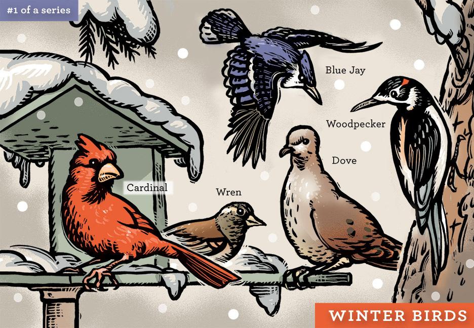 Winter Birds by Billustration